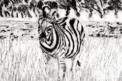 2015-Safari-ets-kopie