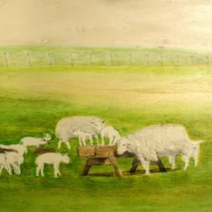 2014 schapen Texel plankje