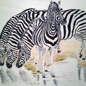 2014 zebra's 3 plankje